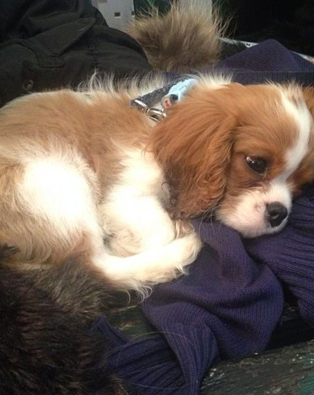 Binky Felstead has posted bucket loads of snaps of her new puppy Scrumble